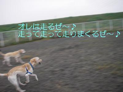 2008-11-16-2.jpg