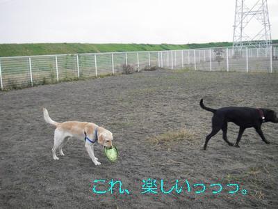 2008-11-16-6.jpg