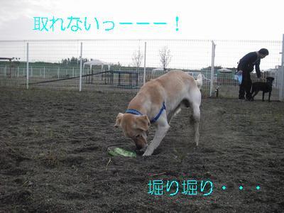 2008-11-16-8.jpg