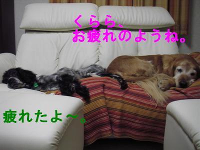2009-01-10-1.jpg