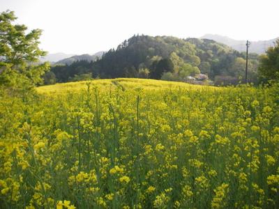 2009-04-30-3.jpg