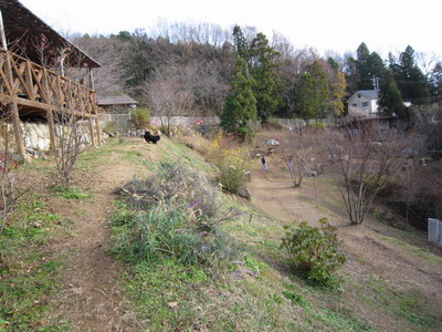 2010-12-12-3.jpg