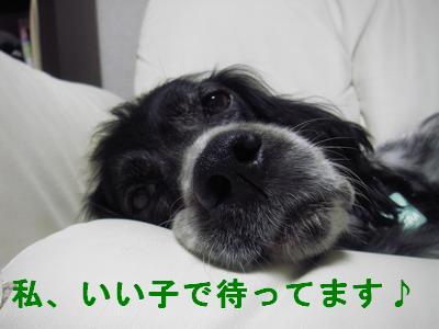 2009-01-10-2.jpg
